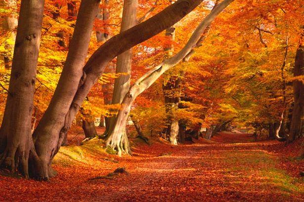 Guest Blog ForTheLoveOfColour Autumn Shelfstore